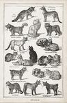 Poster: Les Chats Stationery